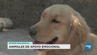 Animales Ayud Apoyo Emocional Hospital Veterinario UNAM Banfield