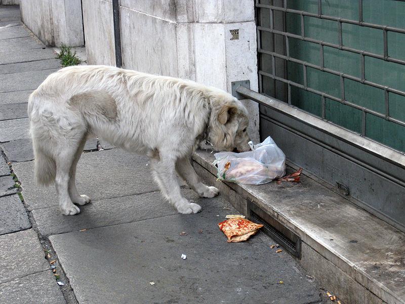 imagen-ilustrativa-asesinan-hombre-acusado-envenenar-perros-torreon