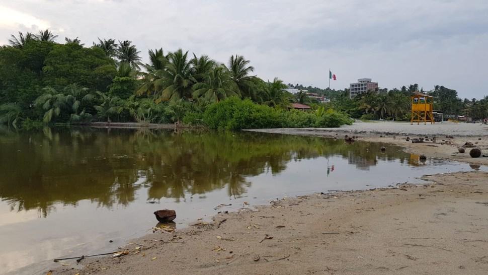Capturan a cocodrilo cerca de playa en Puerto Escondido