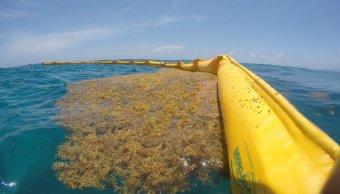 Colocan barrera contra sargazo en Cancún