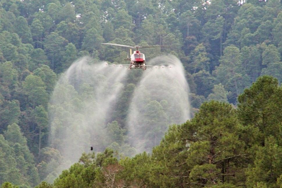 Plagas en Oaxaca amenazan miles de hectáreas de bosques