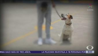 Con perros de acompañamiento, 'Dejando Huella Reinserta' ayuda a niños con autismo