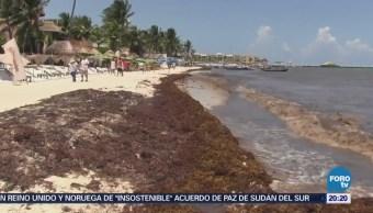 Consecuencias Ecológicas Retirar Sargazo Playas Quintana Roo