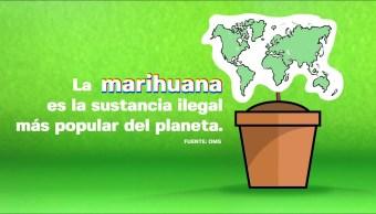 #DespejandoDudas: Despenalización y legalización de la marihuana en el mundo