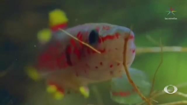 El poder de adaptación de los peces