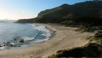 encuentran-calamar-gigante-muerto-nueva-zelanda-playa
