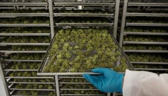 Florida aprueba uso medicinal de marihuana en aulas