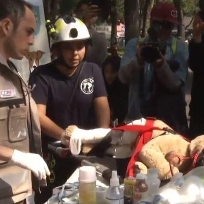 Realizan simulacro de desalojo de mascotas durante sismo en la CDMX