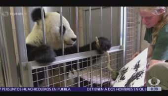 Panda en Viena pinta obras de arte y las venden por internet