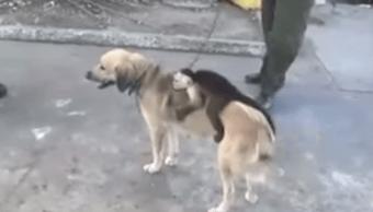 Mono Perra Adoptó Hijo Madre Video