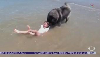 Perro arrastra a niña que jugaba en playa francesa