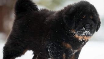 Familia descubre que su perro era un animal en peligro de extinción