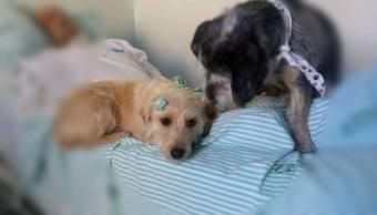 Perros Perritos Hospital Dueño Viral Redes Sociales