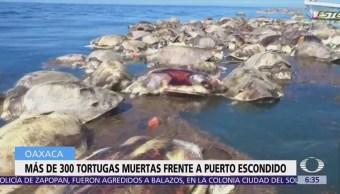 Red ilegal mata a 300 tortugas golfinas en Oaxaca