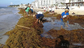advierten riesgos uso maquinaria retirar sargazo caribe