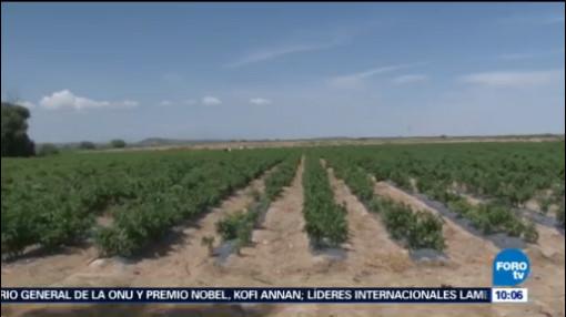 Rescatan A 25 Jornaleros Explotación Laboral Coahuila Víctimas De Explotación Laboral Malos Tratos Rancho