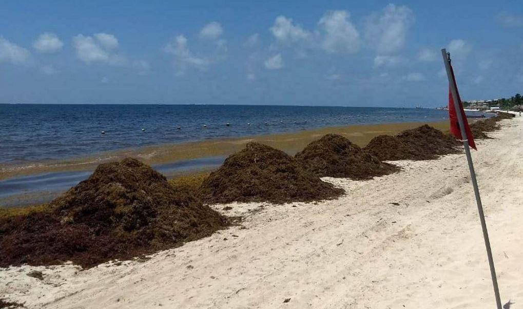 Instalan mesas para analizar solución al sargazo en Quintana Roo