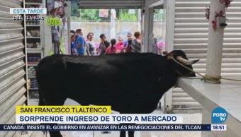 Sorprende ingreso de toro a mercado en la CDMX