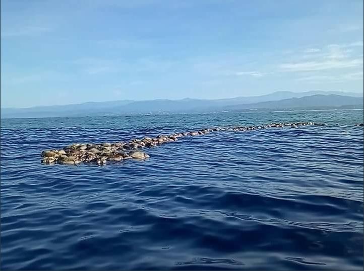 Tortugas marinas mueren por red de pesca en Oaxaca
