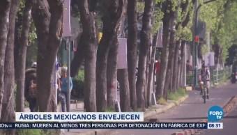 Extra Extra Árboles mexicanos envejecen