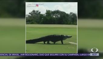 Aparece cocodrilo en campo de golf de Florida