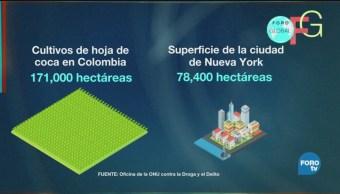 Colombia Récord Cultivo Producción Coca Drogas