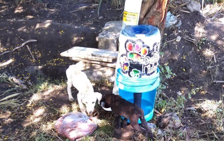 perros callejeros, comedores comunitarios