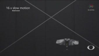 Crean Dron Imita Movimientos Moscas Fruta Tecnología