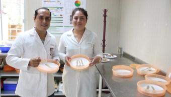IPN Cubiertos Comestibles Salvado Arroz Totopos Mazapanes