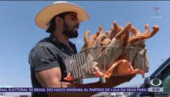 El churrero más sexy de Tijuana
