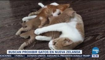 Extra, Extra: Buscan prohibir gatos en Nueva Zelanda
