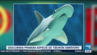Extra, Extra: Descubren especie de tiburón omnívoro