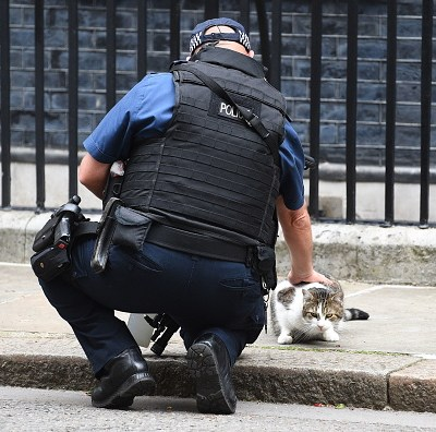 Policía resuelve misterio en Londres; descubre al asesino serial de gatos