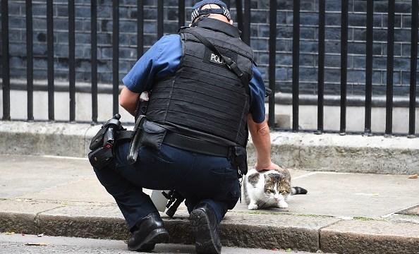 Policía descubre al asesino serial de gatos en Londres