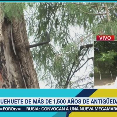 Hallan ahuehuete de 1,557 años de antigüedad tras sismo en Oaxaca