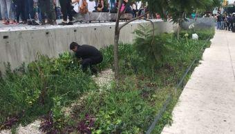 Investigarán plantas de marihuana sembradas en el Monumento