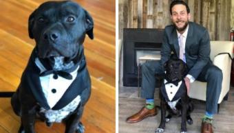 Perrito invitado especial boda se hizo viral