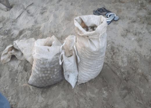 Recuperan más de 2 mil huevos de tortuga en Oaxaca