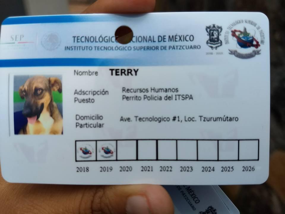 rescatan-perros-callejeros-volverlos-policias-mexico-facebook