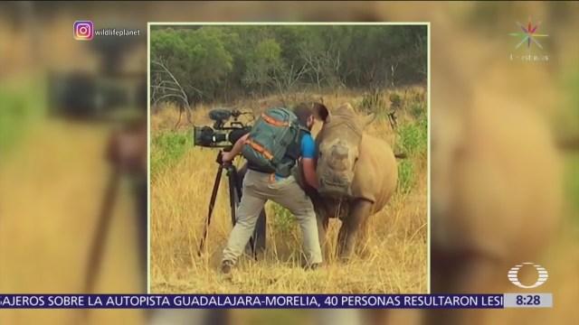 Rinoceronte se deja acariciar por camarógrafo