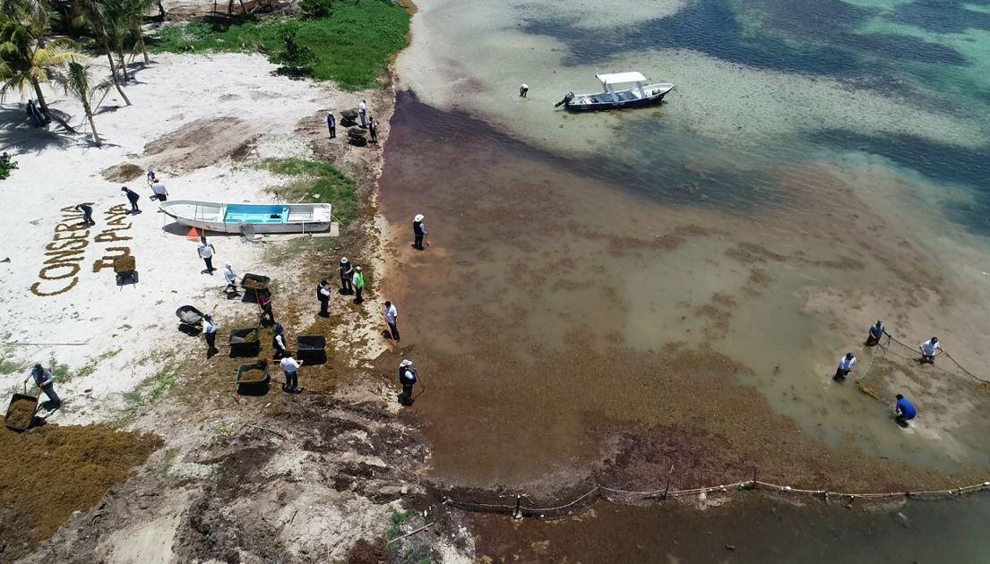 Sargazo en costas del Caribe mexicano