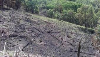 árboles, obra privada, deforestación, cdmx