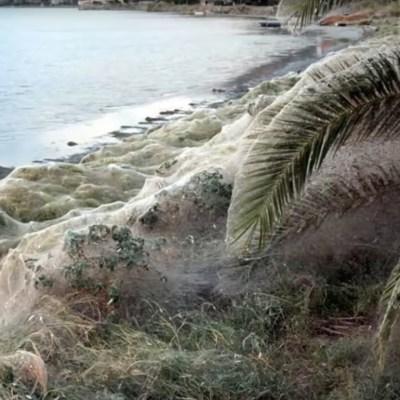 VIDEO: Inmensa telaraña de 300 metros cubrió una playa