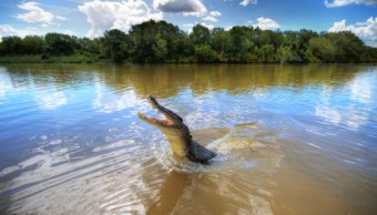 profepa investiga muerte cocodrilo puerto vallarta jalisco