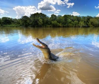 Profepa investiga muerte de cocodrilo en Puerto Vallarta, Jalisco