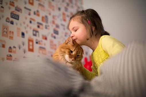 Cuatro cuidados especiales para tu gato, según la UNAM
