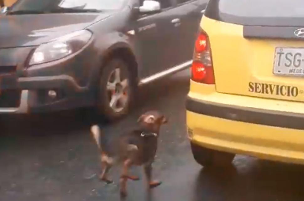 Abandonan A Perro En Medellín, Abandonan Perro, Perrito Abandonado Medellín, Qué Pasó Perrito Abandonado Medellín, Adoptan Perrito Abandonado, Perros