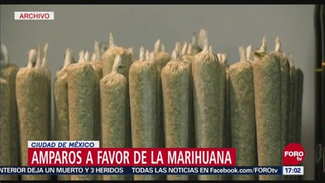 Amparos por la legalización y el uso lúdico de la marihuana