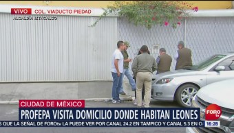 Autoridades verifican estado de leones en Iztacalco