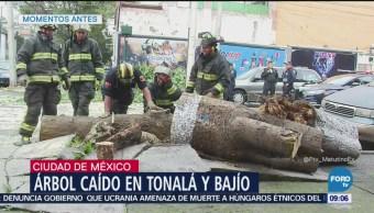 Cae árbol en colonia Roma Sur